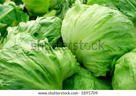 Iceberg lettuce - stock photo