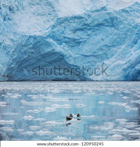 Iceberg on Alaska - stock photo