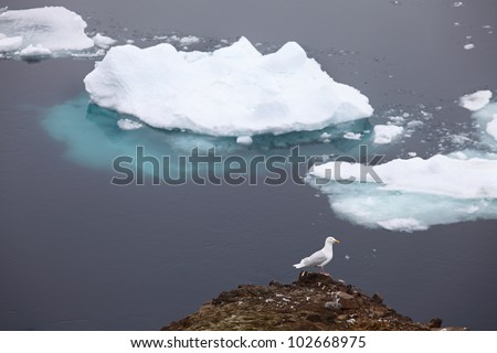 icebergs and seagull on foreground - stock photo