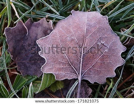 Iced leaf in winter - stock photo