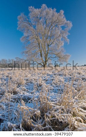 Iced meadow and tree after winter freezing rain event, Michigan USA - stock photo