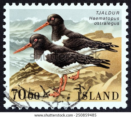 """ICELAND - CIRCA 1987: A stamp printed in Iceland from the """"Birds """" issue shows Eurasian oystercatcher (Haematopus ostralegus), circa 1987.  - stock photo"""