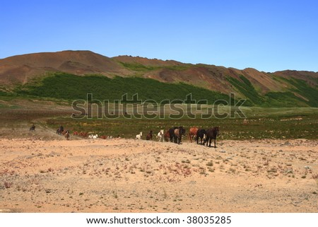 Iceland horses in the north of Iceland - stock photo