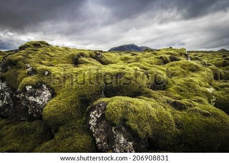 Iceland Lava Field - stock photo