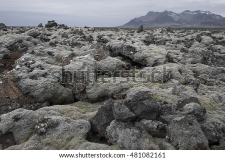 Iceland lava field covered with moss from volcano eruption