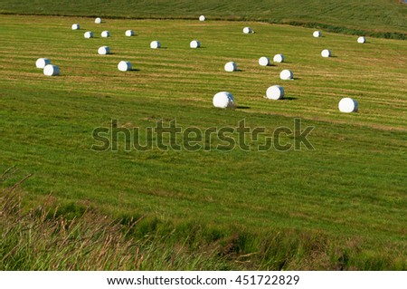 Iceland: packed haystacks in the countryside on August 25, 2012