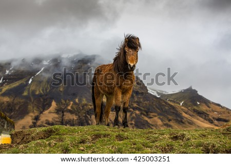 Icelandic horses amongst old ruins in country side