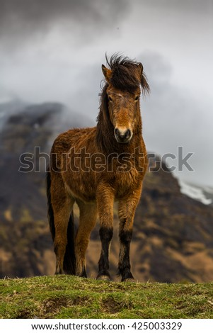 Icelandic horses amongst old ruins in country side - stock photo