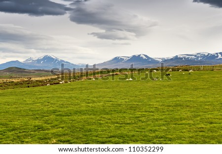 Icelandic landscape - mountains, snow, green grass and sheep - stock photo