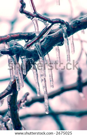 Icicles over branches - stock photo