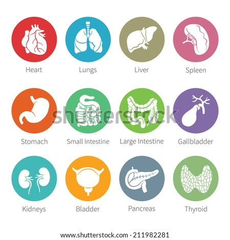 Icon set of human internal organs like heart spleen lungs stomach thyroid intestine bladder gallbladder pancreas kidneys and liver in flat style - stock photo