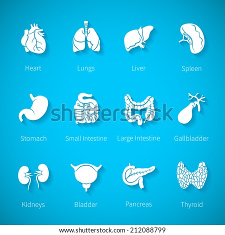 Icon set of human internal organs like heart spleen lungs stomach thyroid intestine bladder gallbladder pancreas kidneys and liver in flat style with shadow - stock photo