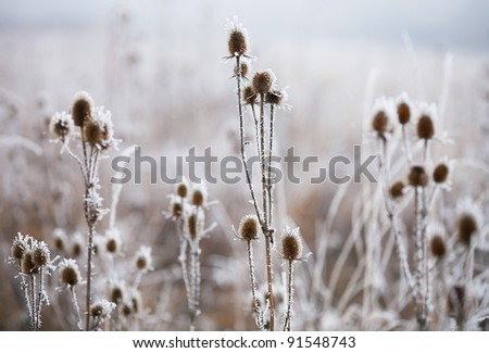 Icy field - stock photo
