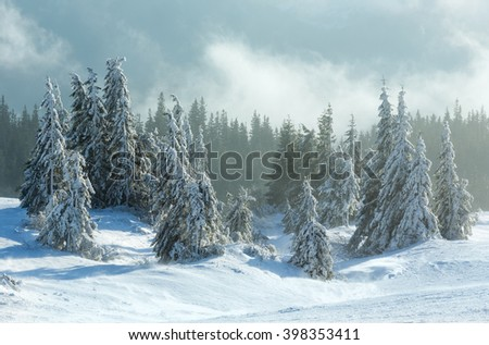 Icy snowy fir forest on winter morning slope in cloudy weather. - stock photo