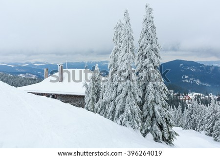 Icy snowy fir trees on top of winter hill (Carpathian).