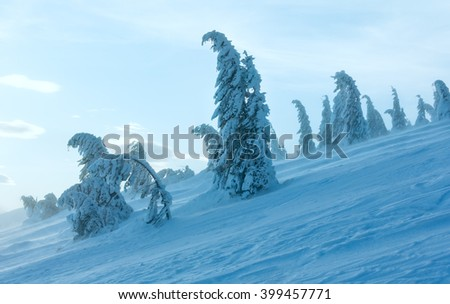 Icy snowy fir trees on winter morning hill in cloudy weather. - stock photo