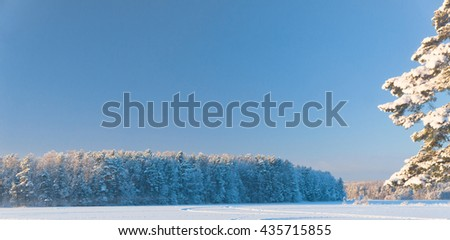 Icy Spruce Frozen Nature  - stock photo