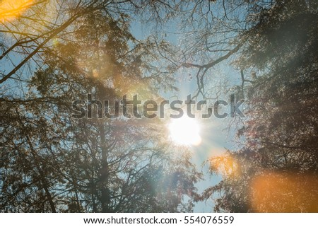 Icy trees with morning sunlight and significant lens flare