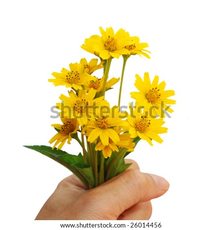 idea of protected natural flowers