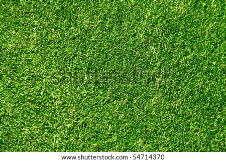 Ideal green grass, can be used as background - stock photo
