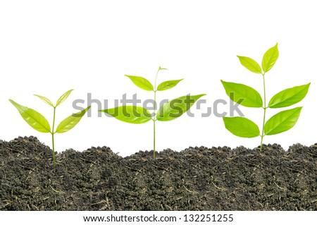 ideas growth plant in white background