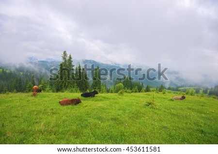 Idyllic alpine scenery with grazing cows and thick white clouds. Mountain grassland with grazing cows in summer pasture. Cows on farm. Agricultural composition, Carpathians, Ukraine - stock photo