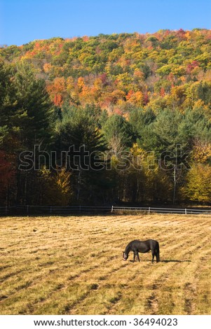 Idyllic autumn landscape with a horse grazing in a spacious pen - stock photo