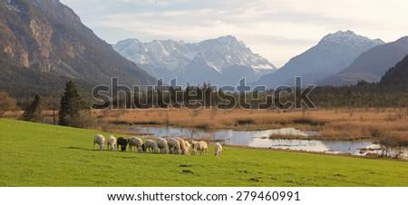 idyllic bavarian scenery with grazing sheep flock, bogland and the alps - stock photo
