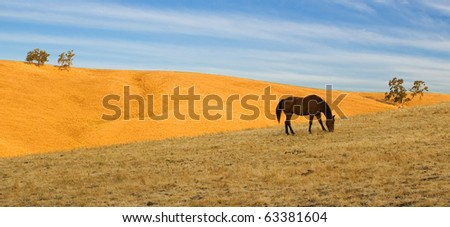 Idyllic colorful landscape with single horse on the golden Californian hills