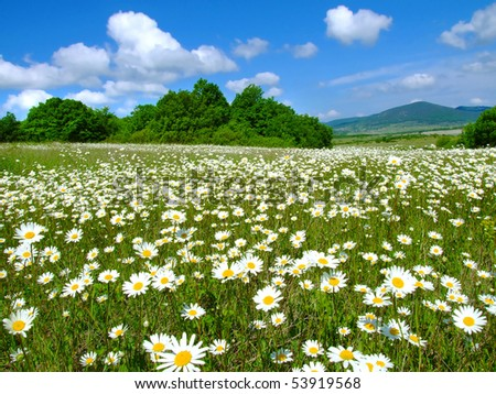 Idyllic daisy meadows - stock photo