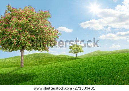Idyllic landscape with a blooming chestnut tree - stock photo