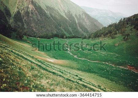Idyllic landscape with fresh green meadows and blooming flowers and snowcapped mountain. Rural view of the pastures. - stock photo