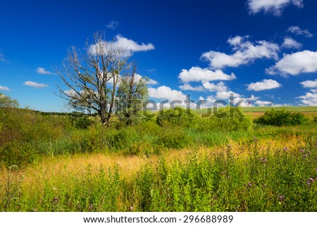 Idyllic meadow scenery in Poland  - stock photo