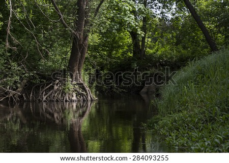 idyllic mid wood river scene with forests