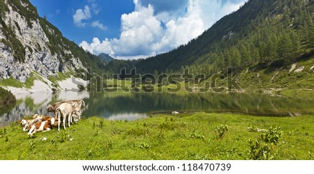 Idyllic pasture in the mountains with a small group of cows relaxing at a lake (Lake Schwarzensee-Tauplitz-Austria)