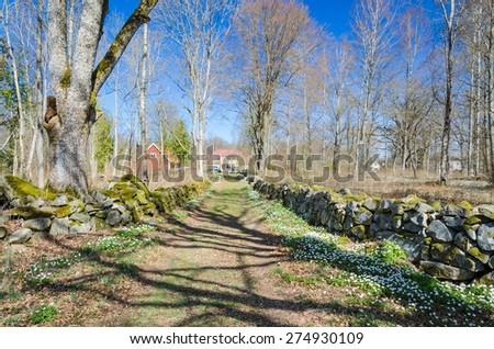 Idyllic road to the house with anemone flowers - stock photo