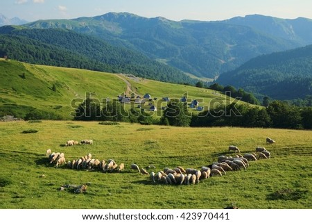 idyllic scene with flock of sheep and eco-lodges in Biogradska Gora National Park, Montenegro  - stock photo