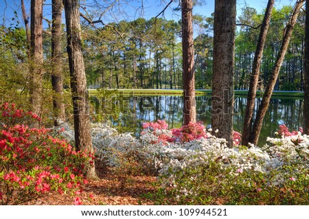 Idyllic setting of tranquil lake at Callaway Gardens, GA, framed by azaleas in the foreground; typifies Spring.