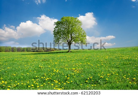 Idyllic spring landscape - stock photo