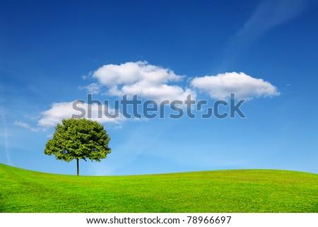 Idyllic summer landscape - stock photo
