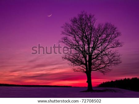 idyllic sunset in the field - stock photo