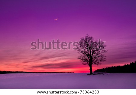 idyllic sunset in the field - stock photo