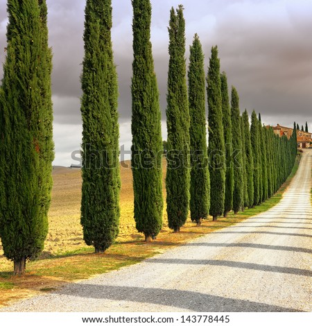 Idyllic Tuscan landscape with cypress alley at sunset near Pienza, Vall d'Orcia Italy, Europe. Cross processing from RAW file - stock photo