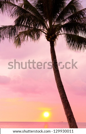 Idyllic Wallpaper Coconut Horizon