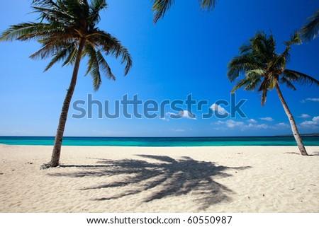 Idyllic white sand tropical beach with palm trees - stock photo