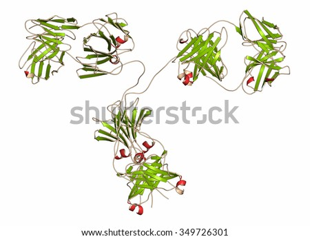 IgG2a monoclonal antibody (immunoglobulin). Many biotech drugs are antibodies. Cartoon representation with secondary structure coloring (green sheets, red helices). - stock photo