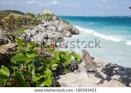 Iguana is looking at Mayan ruins in Tulum, Mexico - stock photo