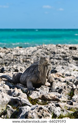 Iguana's portrait in a landscape - stock photo