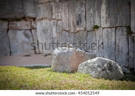 Iguana sitting on ruins of El Castillo (The Kukulkan Temple) of Chichen Itza, mayan pyramid in Yucatan, Mexico.  - stock photo
