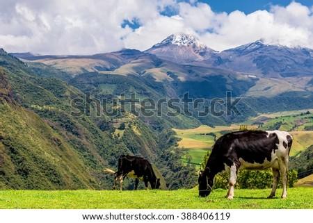 Ilinizas volcano, Ecuador. - stock photo